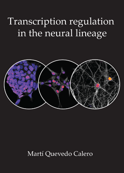 Transcriptional Regulation In The Neural Lineage